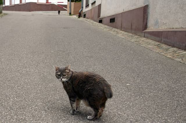 The DOH will be putting up signs warning residents about a stray cat that had rabies in the area.