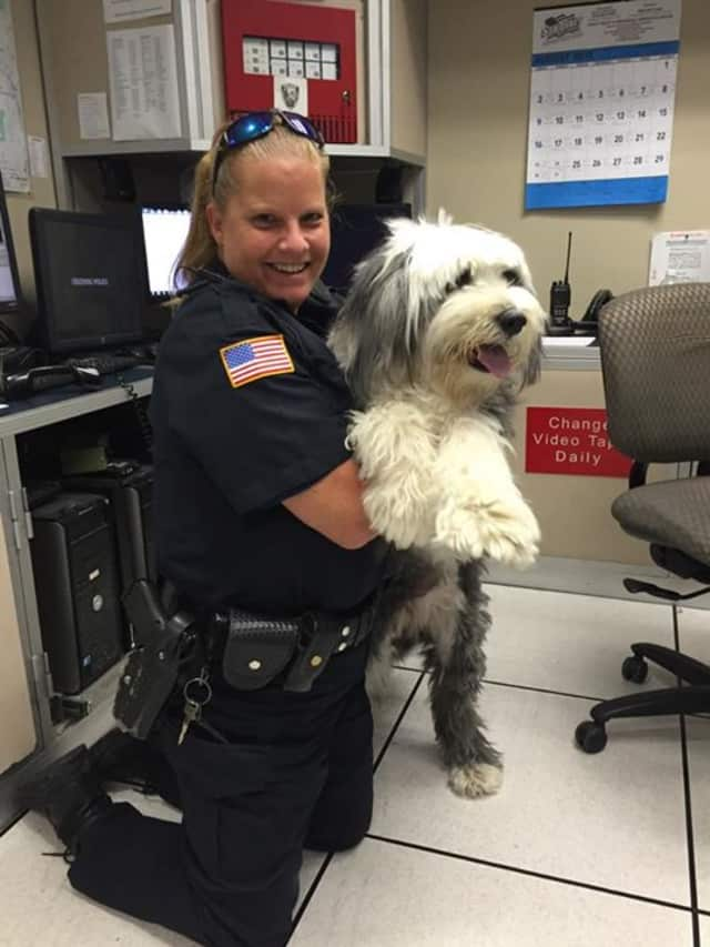 The Ossining Police Department have located the owner of a dog that was lost.