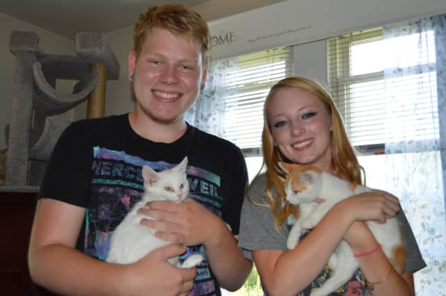 Volunteers cuddle the kittens at Tails of Courage in Danbury