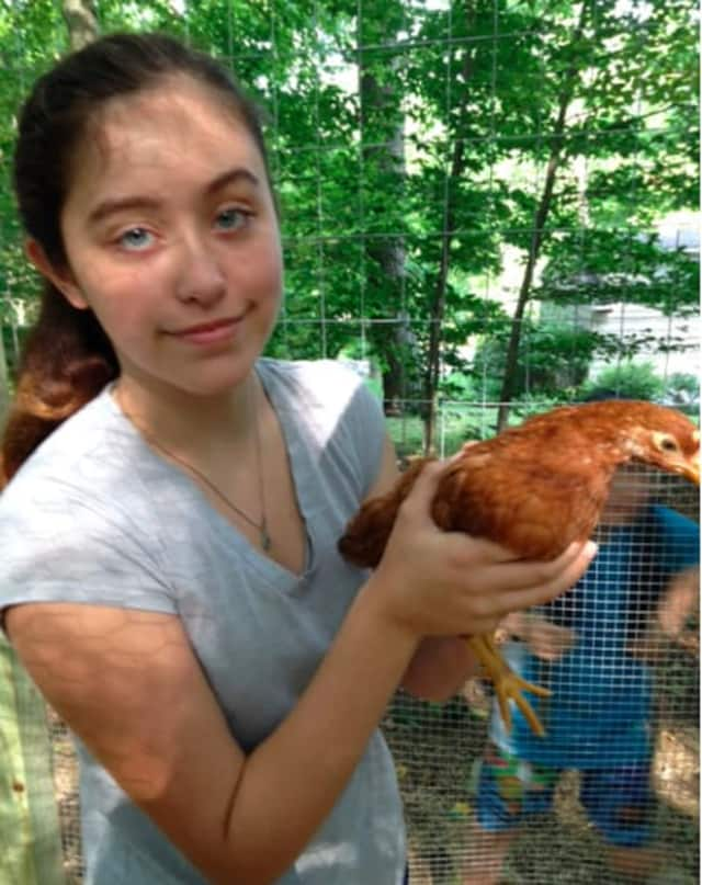Anna Clark of Wilton is considering entering her Rhode Island Red in Wilton's Cannon Grange Agricultural Fair scheduled for Sunday, August 30.