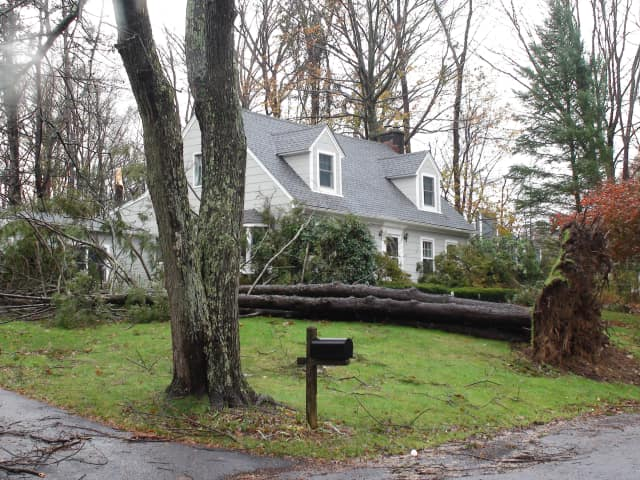 Fallen trees will not be picked up unless they are within Yorktown's right-of-way.