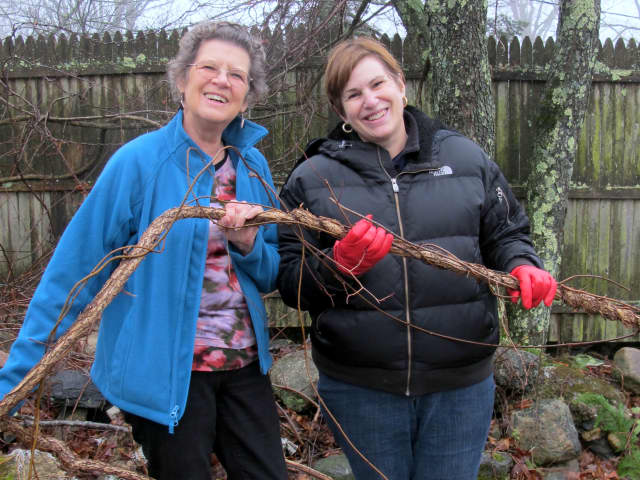 Carolynn Sears, left, and Marilyn Shapiro-Lowell hold a bittersweet vine, an invasive species found throughout Pound Ridge.