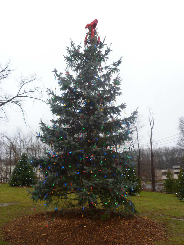 Yorktown will hold a candlelight vigil Thursday night near the Christmas tree at Jack DeVito Field.