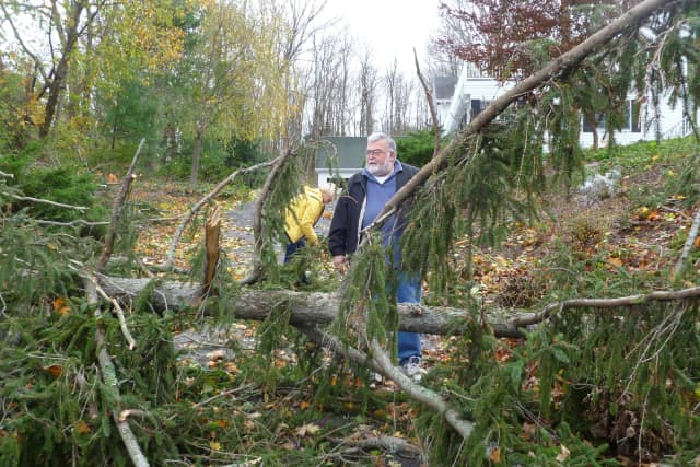 Trees fell all over town when Hurricane Sandy hit Wilton in late October. This one fell in front of the office of dentist Dominick Agostin.
