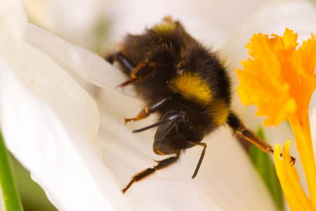 Teatown will host a program on bees April 19.