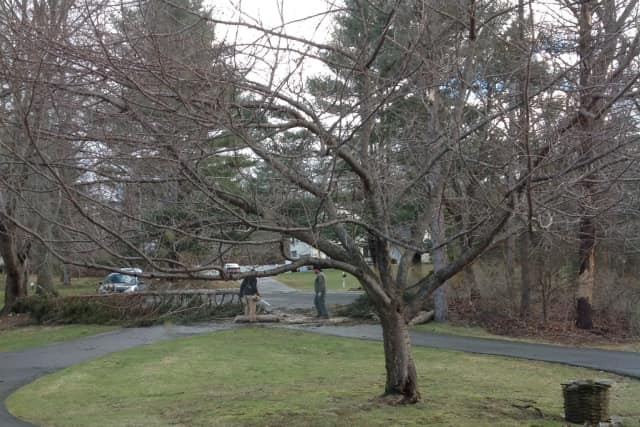 Wilton resident Maya Boreen sent in this photo of men cutting into a fallen tree outside her home on Heather Lane.