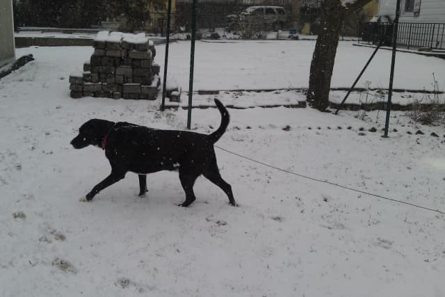 Tarrytown reader Katharine Swibold sent this photo of her dog, taken on Independence Street on Friday.