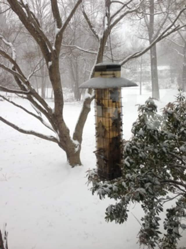 This was taken Friday during the storm. Lynn says all the birds had left to find safe havens.