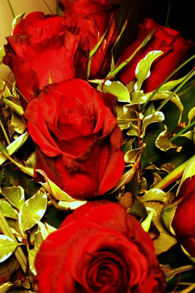 Red roses are always a popular Valentine's Day gift.