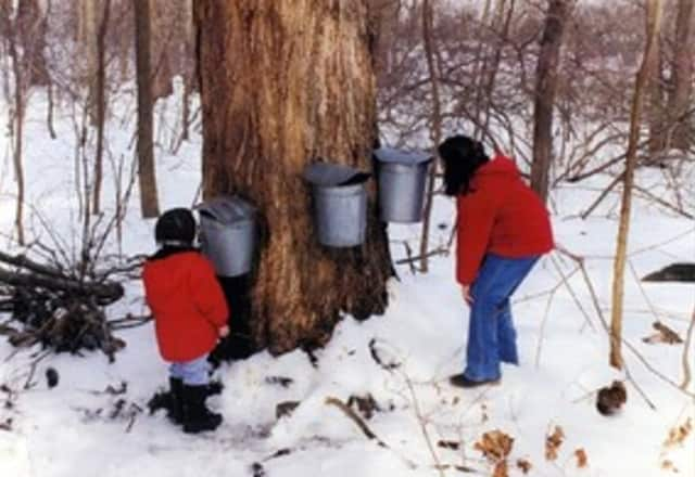 Learn about sugaring this weekend at the Teatown Lake Preserve.