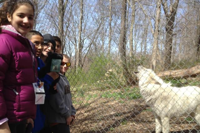 Take sunset photos on Sunday of the wolves at South Salem's Wolf Conservation Center.
