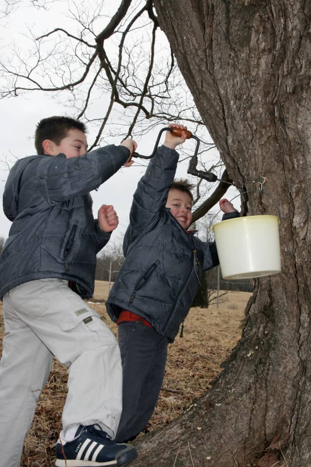 The Kim family was out tapping a North Salem maple tree Saturday afternoon.
