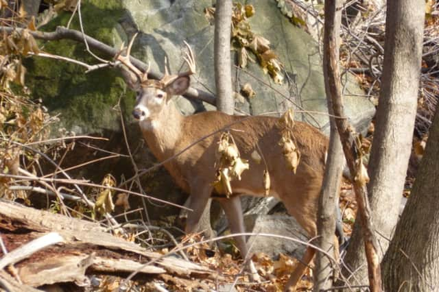 This local deer maybe getting birth control if the Village of Hastings approves a plan to vaccinate the deer population.