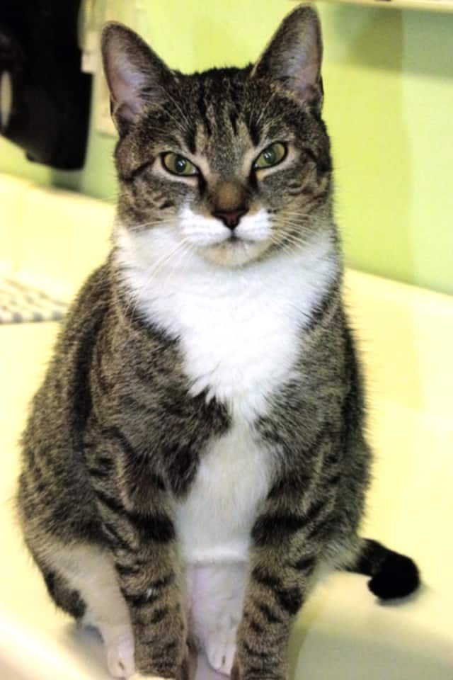 Feline experts will offer tips on different aspects of caring for and enjoying cat companions in celebration of National Cat Health Month on Saturday, Jan. 30 at the Westport Library.