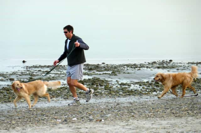 Residents have one day left to take their dogs for a jog on Westport beaches.