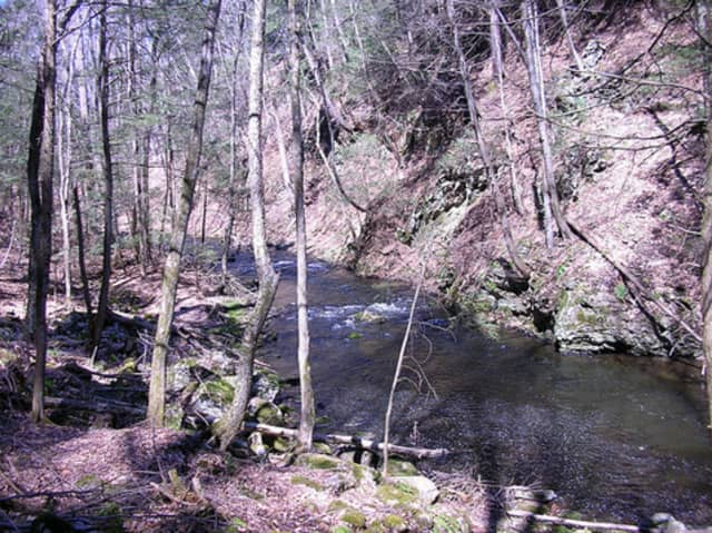 The Mianus River Gorge celebrates its birthday every year on April 1 by opening its trails to the public.