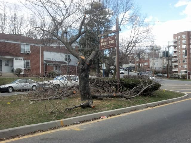 Park Hill residents said they were outraged after private contractors cut down parts of a Rumsey Road tree to make way for  red light camera last week.