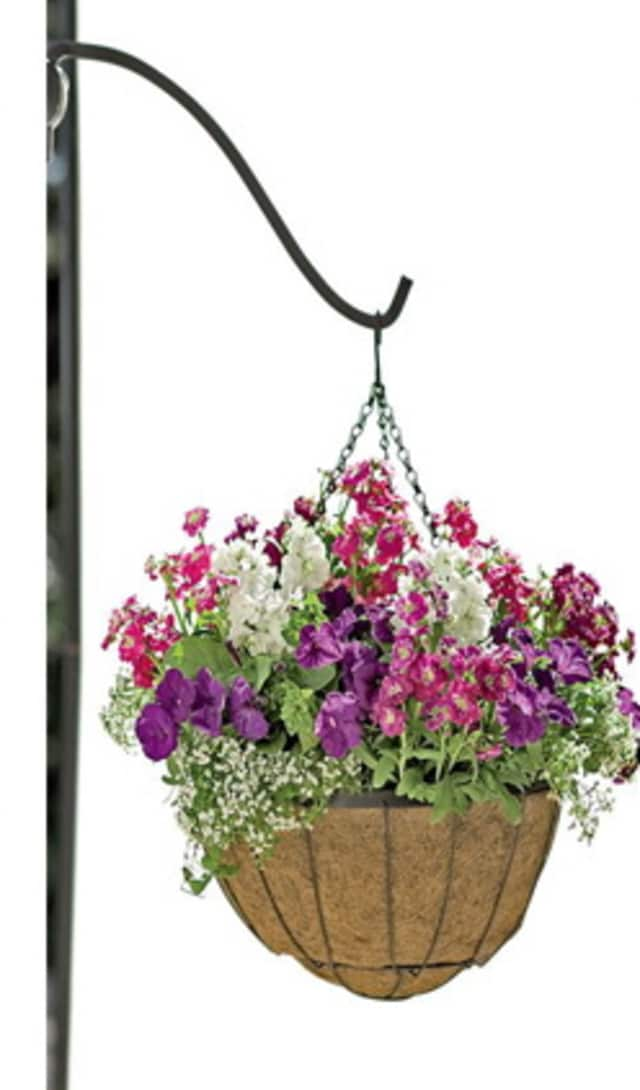 The Pelville Beauti?cation Committee is seeking $25 donations to continue the Village of Pelham's tradition of hanging baskets alive.