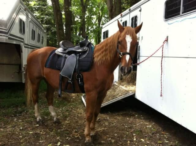 Bella's Way Equine Rescue will be in New Canaan to teach people how to rescue horses in need on Saturday.