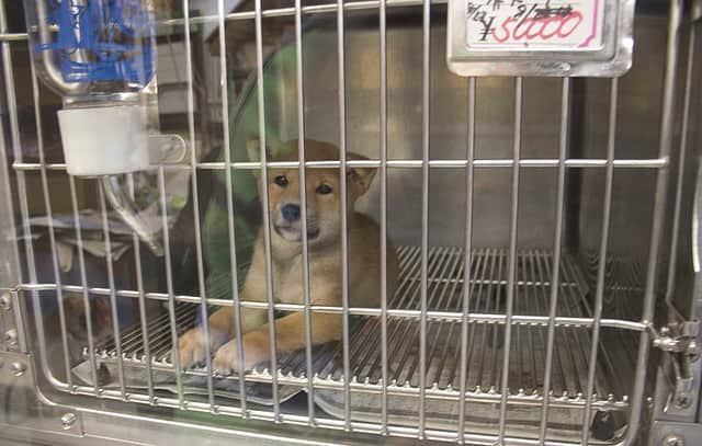 Springfield may soon ban the sale of pets in city pet stores.
