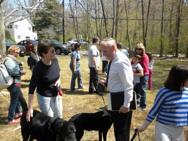 """Rabbi Fred Schwalb blesses dogs last Sunday at Hebrew Congregation of Somers annual """"Bark Mitzvah."""""""