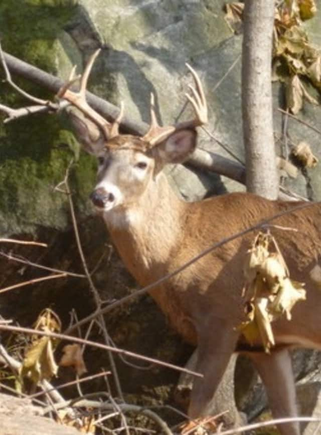 Hastings deer are the focus of a Board of Trustees plan to administer birth control.