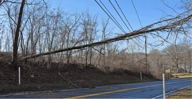 Trees knocked onto wires during Wednesday's storm has impacted power service throughout Fairfield County.