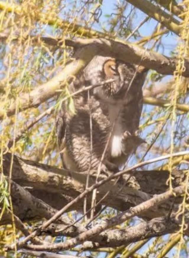 Bergen County Audubon will hold an evening nature walk in Teaneck.