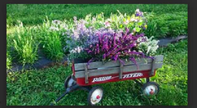 Founders Hall in Ridgefield will host a talk on organic flowers on July 15.