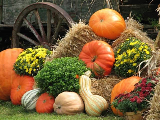 The New Jersey Botanical Garden and the Ringwood Chamber of Commerce are hosting Harvest Fest Oct. 1-2.