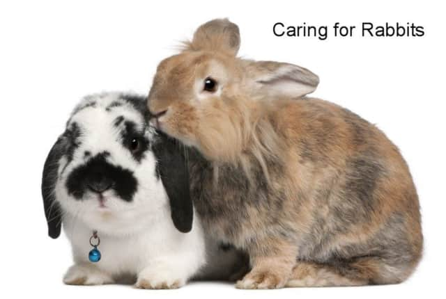 Animal experts will present a program about the different breeds of rabbits and how to care for them.