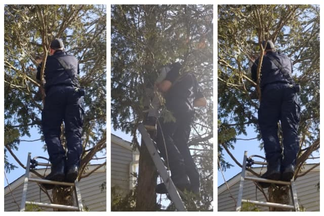 Danbury firefighter Nick Nunnally rescues a 4-year-old boy from a tree.