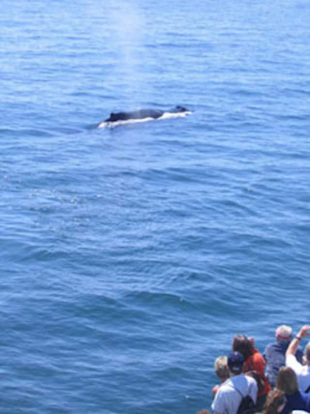 It is illegal to approach a right whale within 500 yards, unless granted specific exemption or authorization.