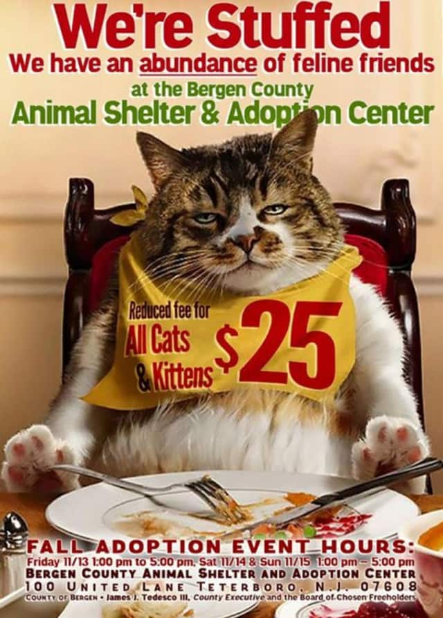 The Bergen County Shelter and Adoption Center is encouraging adoption of their abundance of cats and kittens with special hours and reduced fees. Come down to the shelter at 100 United Lane in Teterboro and meet your new best friend.
