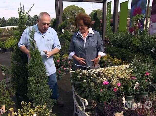 The Nichols Garden Club is hosting a presentation on flowering shrubs Tuesday.