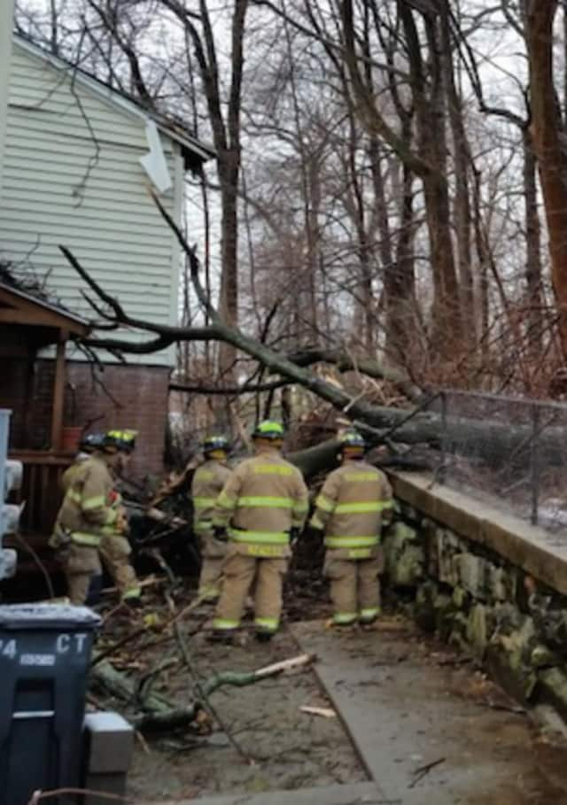 Stamford firefighters check out the damage from a fallen tree Sunday.