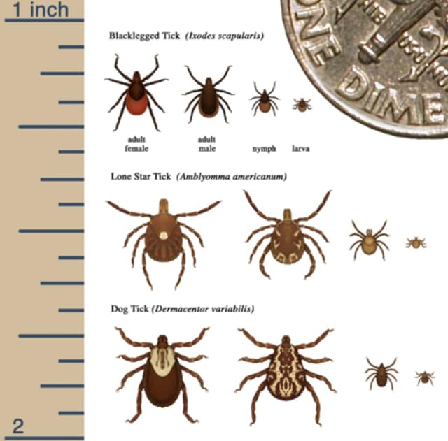 A look at tick sizes compared to the size of a dime (upper right corner).