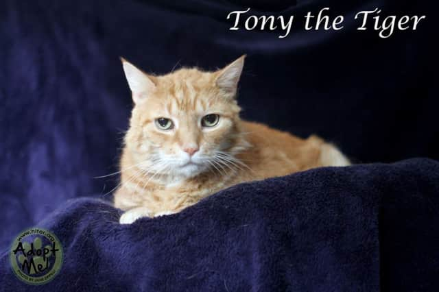 Tony the Tiger needs a home.
