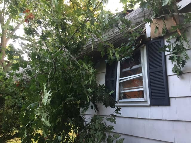 A tree injured a woman and did significant damage to her home Thursday morning.