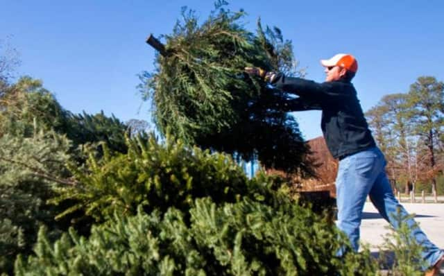 Christmas trees in Prospect Park will be collected curbside starting Jan. 4.