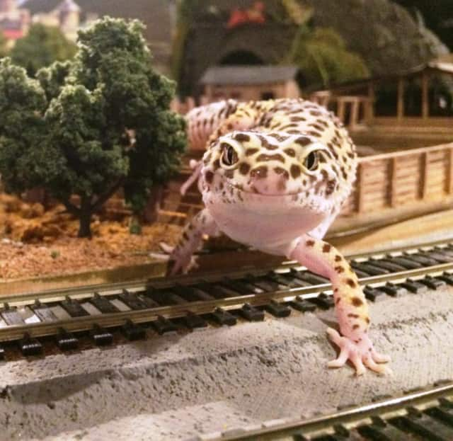 The Yonkers Model Railroad Club's train displays come together with members of the Greenburgh Nature Centers's animal family.
