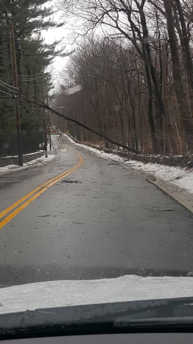 Hundreds of trees have been felled during the Nor'easter throughout the Hudson Valley, with 13 in Greenburgh.