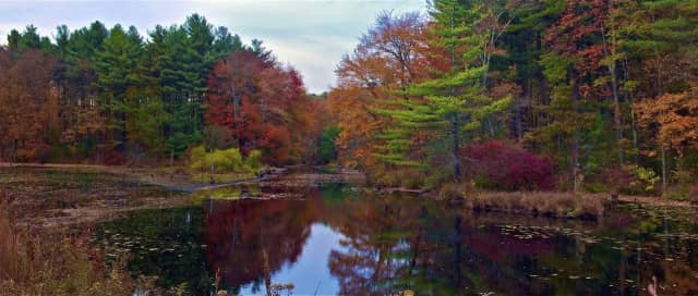 It's full range of fall color in this swampy area of Stepney, a neighborhood in Monroe.