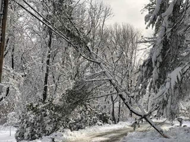 Downed trees and power lines caused power outages overnight for thousands of Fairfield County residents.