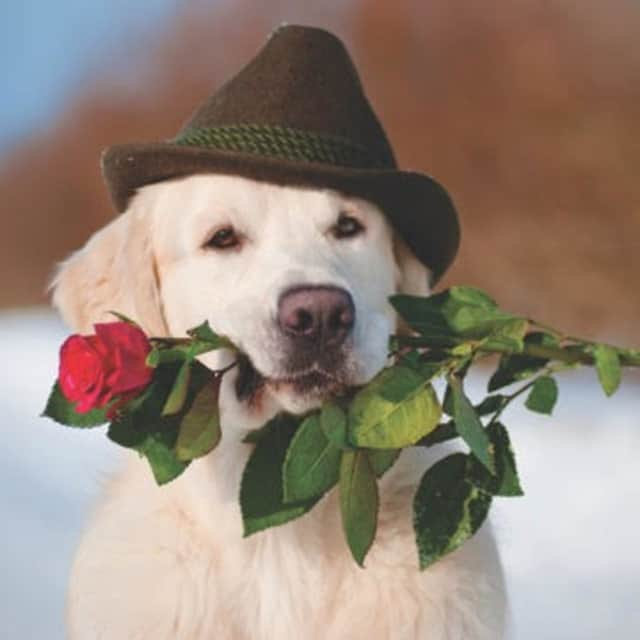 Dogs deserve gifts on Valentine's Day, too, says Wilton Canine Co.