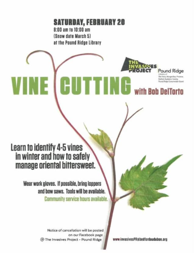 The Invasives Project in Pound Ridge is hosting a talk on vine cutting.