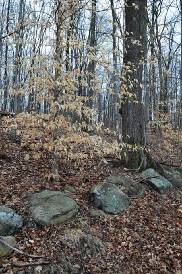 The Putnam County Land Trust and the Westchester Land Trust have teamed up to preserve 81 acres of land in Southeast.