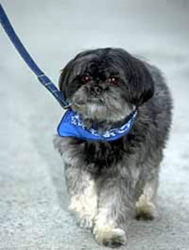Cresskill pet owners must obtain licenses for their pets.
