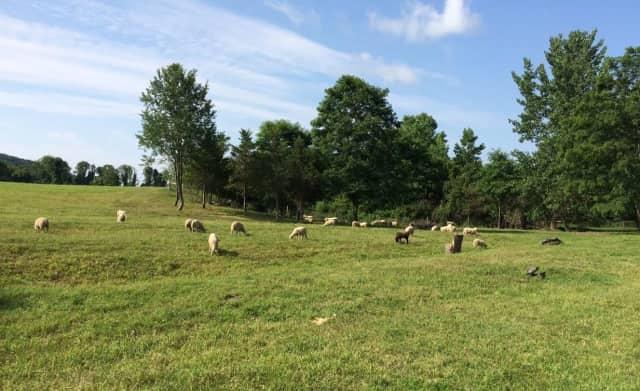 Caora Farms