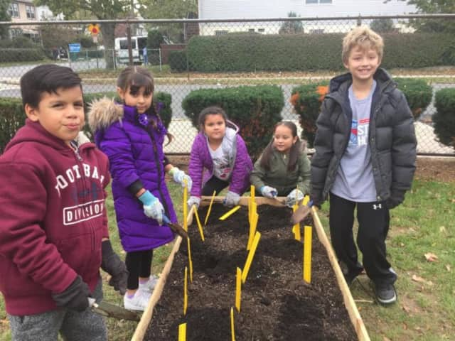 Second-graders at Columbus Elementary School planting daffodils in New Rochelle.
